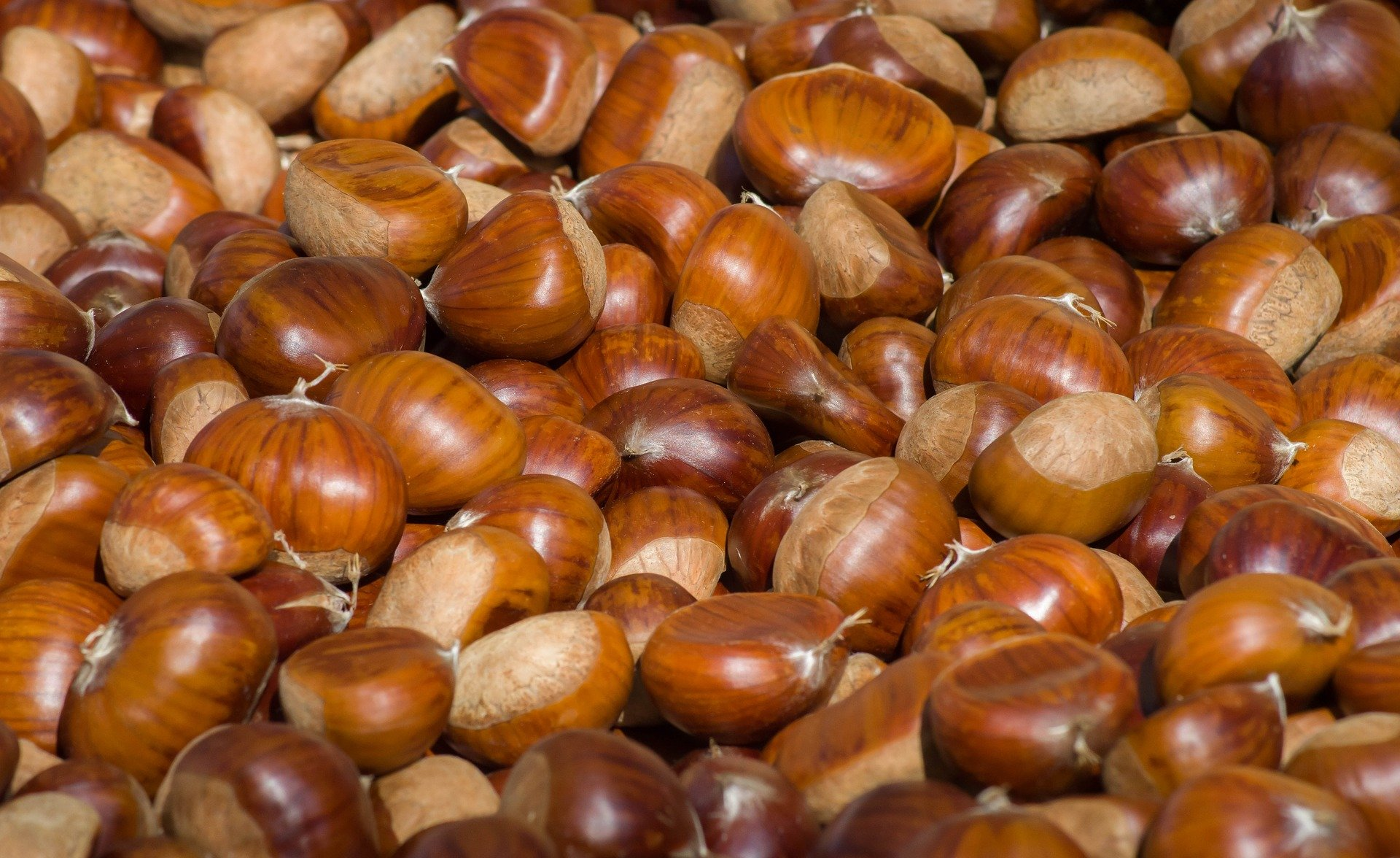 chestnuts-3727959_1920